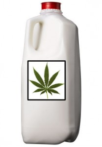 marijuana milk1 Cannabis Milk Recipe